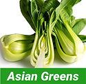 Asian greens.JPG