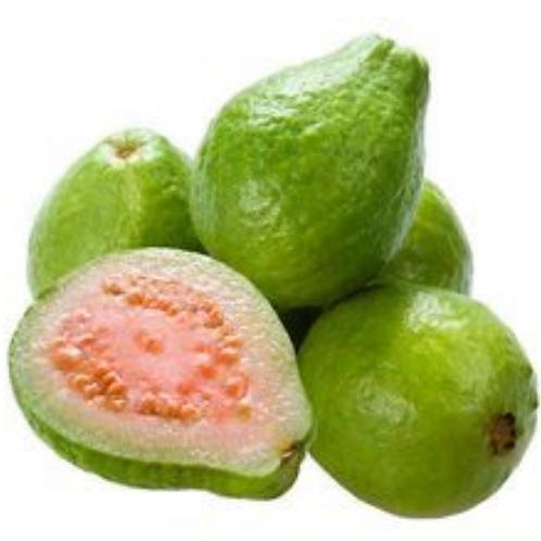 Jumbo pink guava 1ea  Appx 12z(USA)