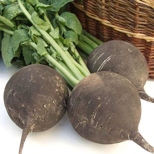 Organic Spanish black radish 1 lb (USA)