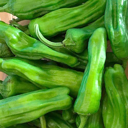 Organic Shishito peppers 1 pint (Mx)