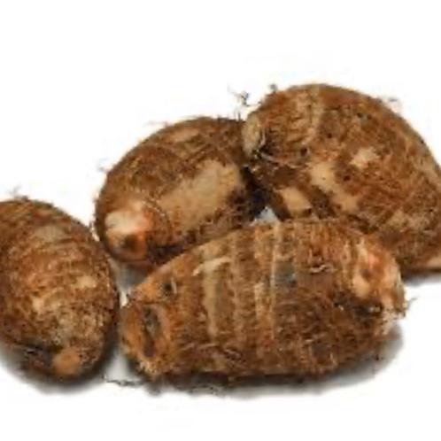 "Small taro ""Eddoe"" (CR) 1 lb"