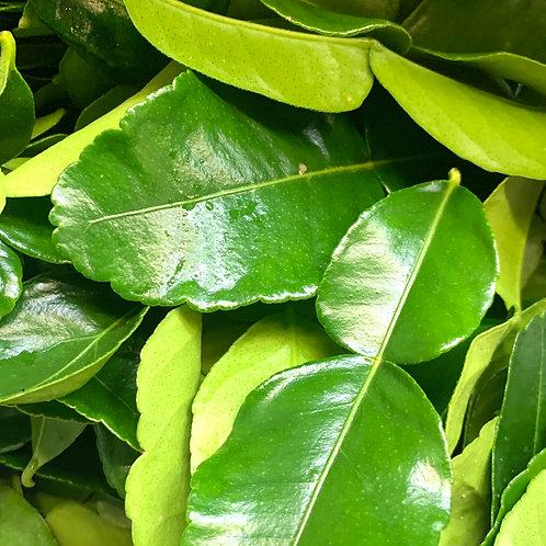 Keifer lime leaves (1z)