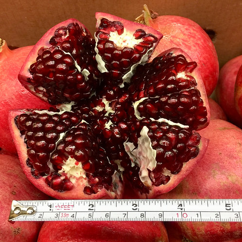 Pomegranate 25lbs Utility Box