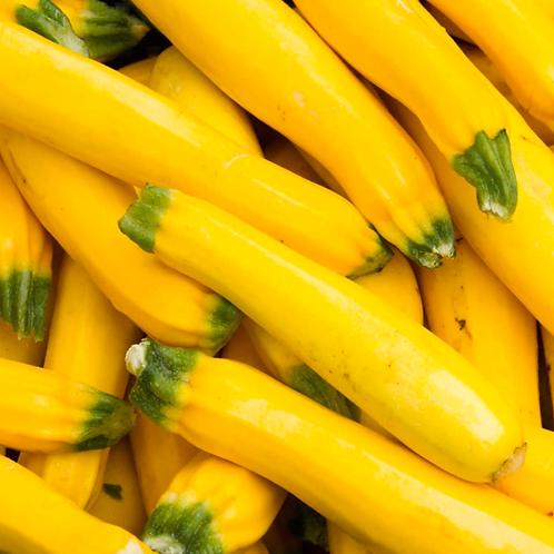 Yellow squash appx 1 lb.