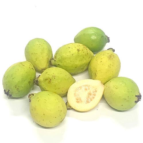 Creamy Guava 14oz Clamshell