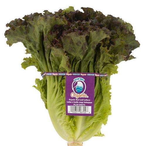 Organic red leaf lettuce, 1 ea