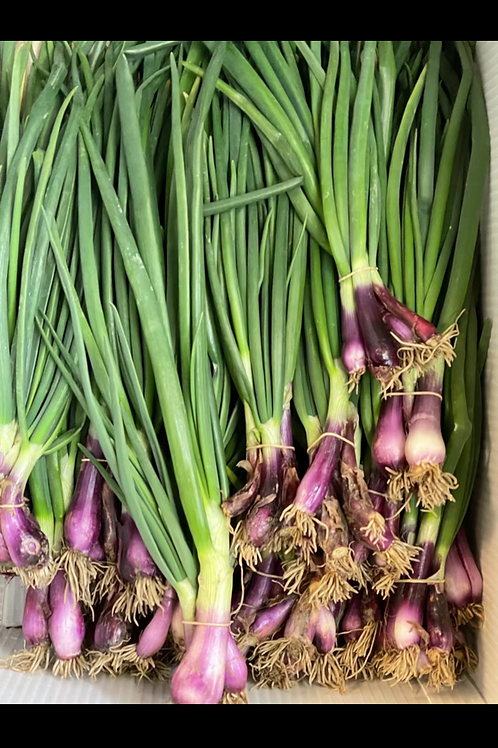Red Spring Onions -1 bunch (Local)