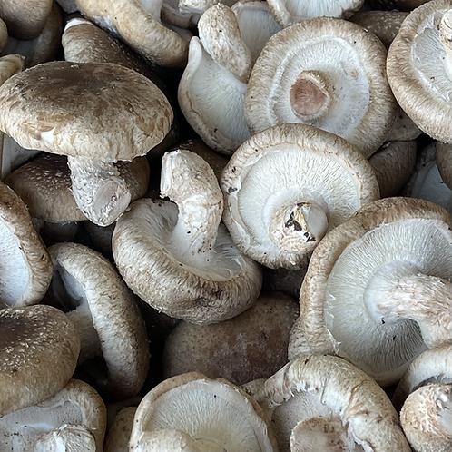 Shiitake Mushrooms 1 lb. (USA)
