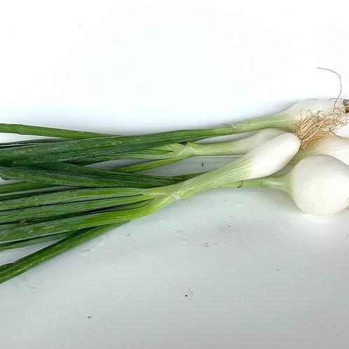 Organic white spring onions 1lb