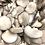 Thumbnail: Oyster mushrooms 1lb  (USA)
