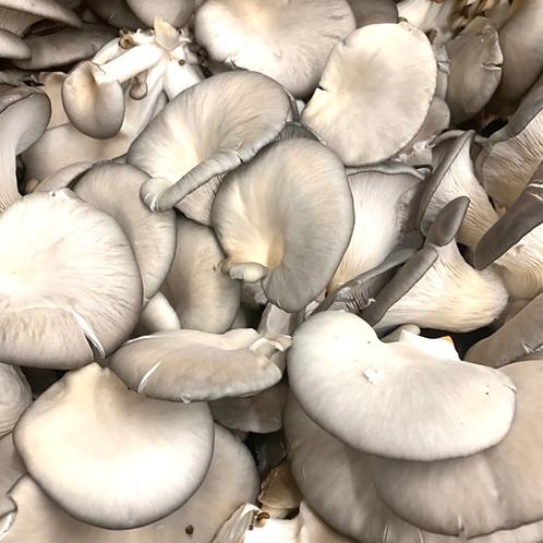 Oyster mushrooms 1lb  (USA)