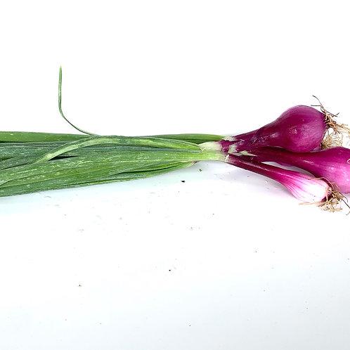 """Red Torpedo"" spring onions 1 lb"