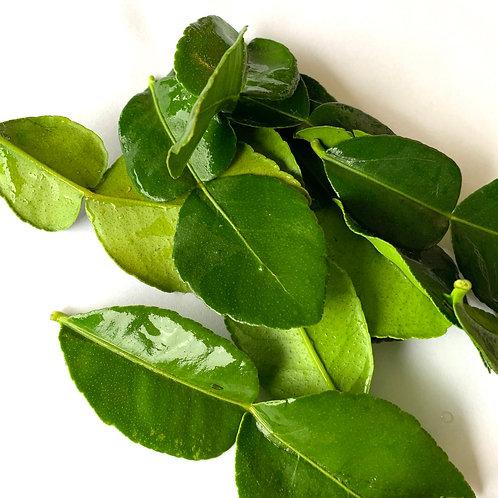 Kiefer Lime Leaves appx 10 leaves