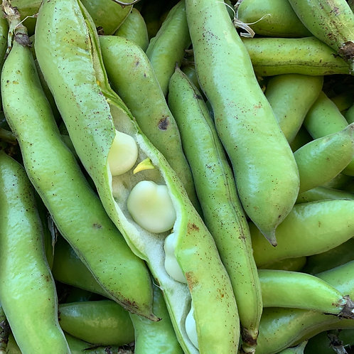 Fava beans 1lb