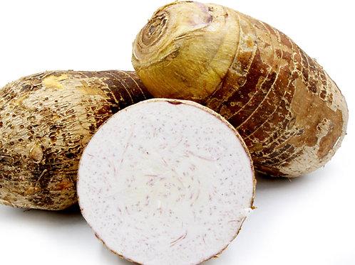 Big Taro Root 2-2.5lbs