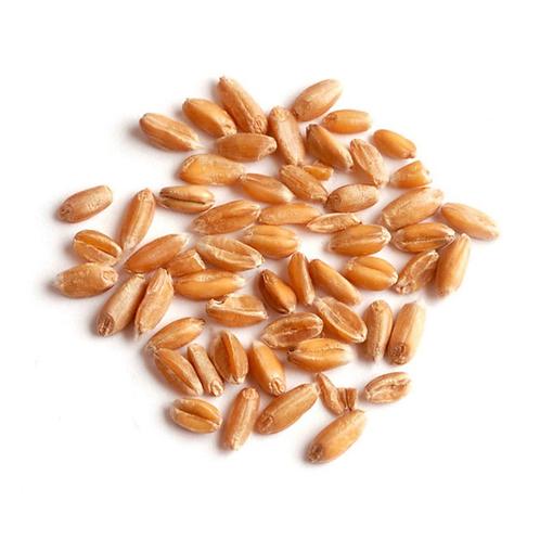 Dried spelt, bulk (1 lb) USA