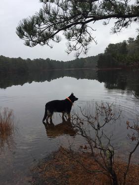 Cree at the pond