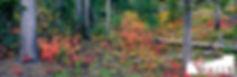 AmongtheForest.jpg