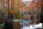 AutumnCypress.jpg