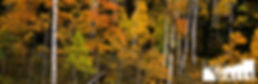 Colors-of-Fall-Creek 3 to 1 - 077.jpg