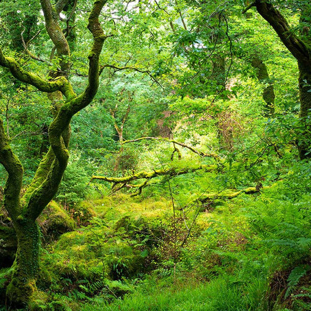A Brief History of British Woodlands