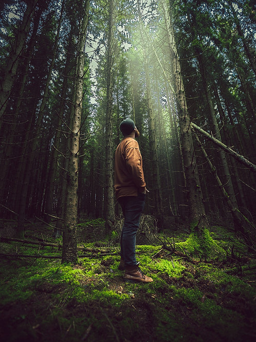 Forest Bathing For Organisations