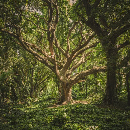 When I Was the Forest – A poem by Meister Eckhart
