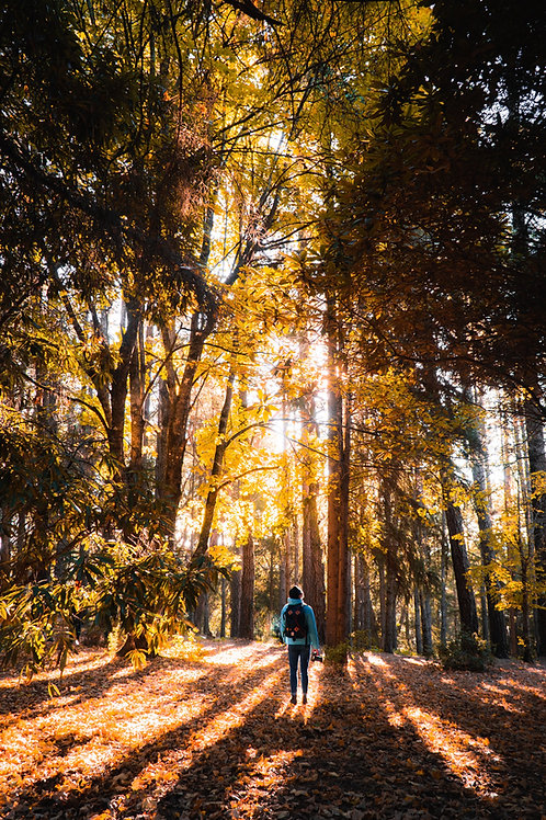 Forest Fridays Small Group Forest Bathing Experience 30th July