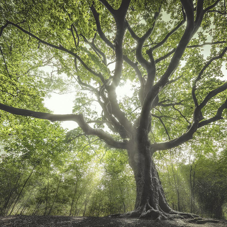 Could trees be the saviours of us all?
