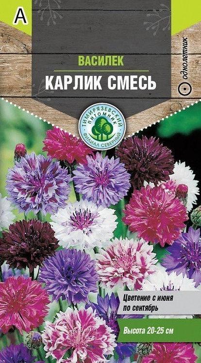 Семена Тимирязевский питомник цветы василек Карлик  0,5г 11604171