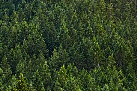 Green-Mountain-State-Forest-hillside-EdB