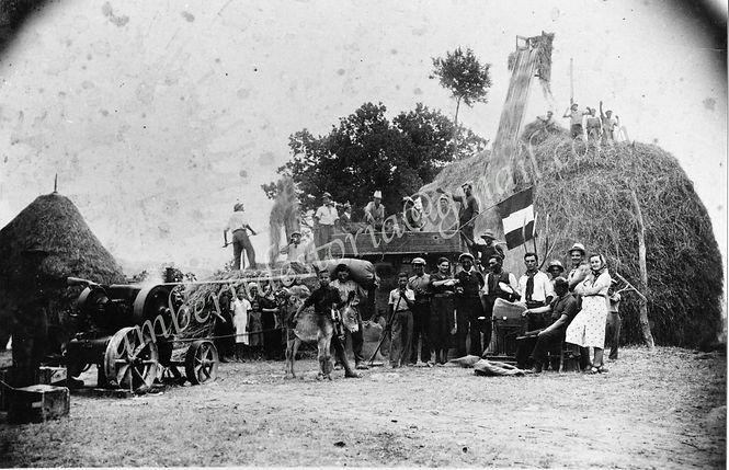 MIETITURA-BATTITURA-1928Storiche archivi