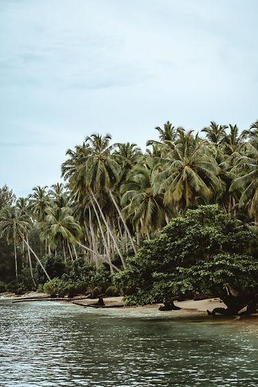 coconut-10.JPG