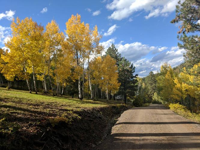 Fall pic of driveway (2018_02_11 21_28_5