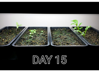 Day 15 - Should it stay or should it go?