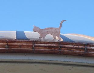 chat natali, gouttières, barjac