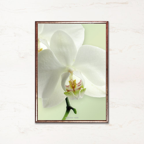 Orkidé - Plakat