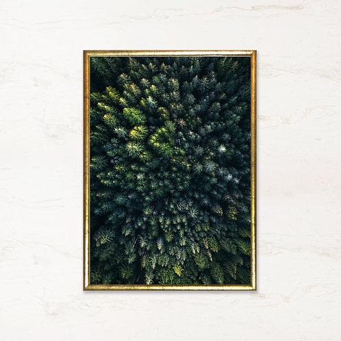 Skov - plakat