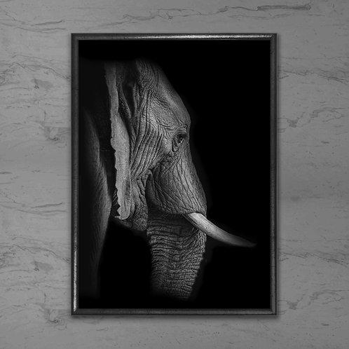Elefanten - Plakat i sort-hvid