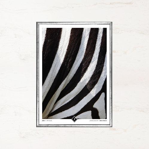 Zebraens pels - Plakat