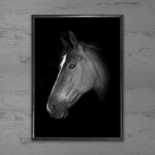 Hesten - Plakat i sort-hvid