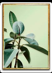 Plakat med gummi træ
