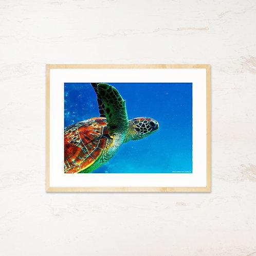 Great Barrier Reef, Australien - Plakat