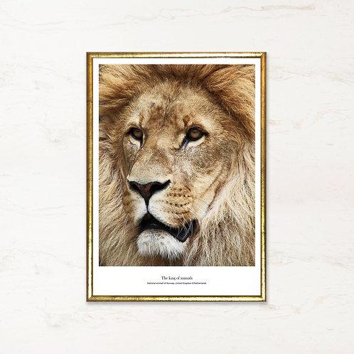 The King - Fotokunst