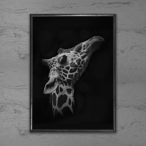 Giraffen - Plakat i sort-hvid