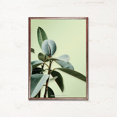 Gummitræ - Plakat