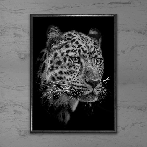 Leoparden - Plakat i sort-hvid