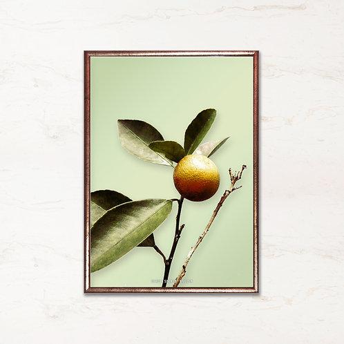 Appelsintræ - Plakat