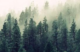 Imagi vil stoppe skovrydning
