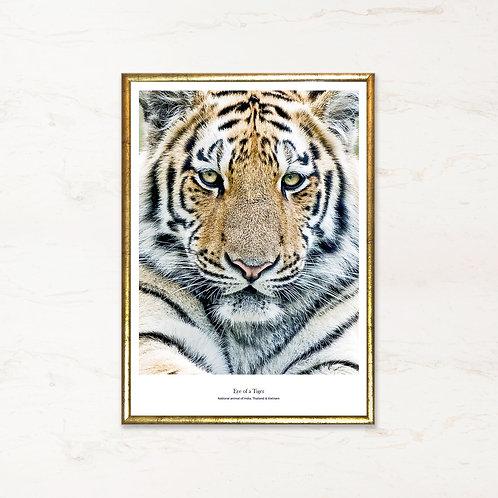Eye of a tiger  - fotokunst